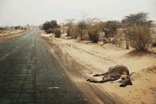 Kadaver i Sahel