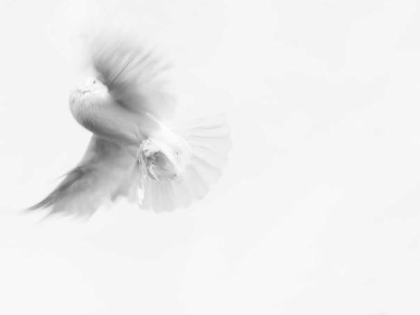 inspiration-holy-spirit.jpg